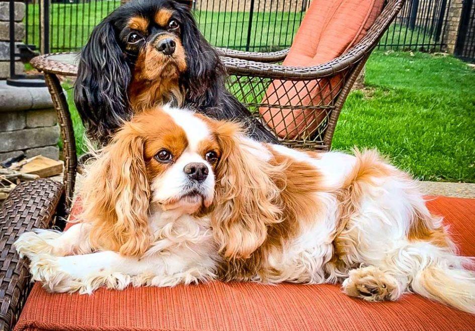 Gino and Bella