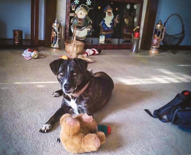 Mr.Beau Doggie
