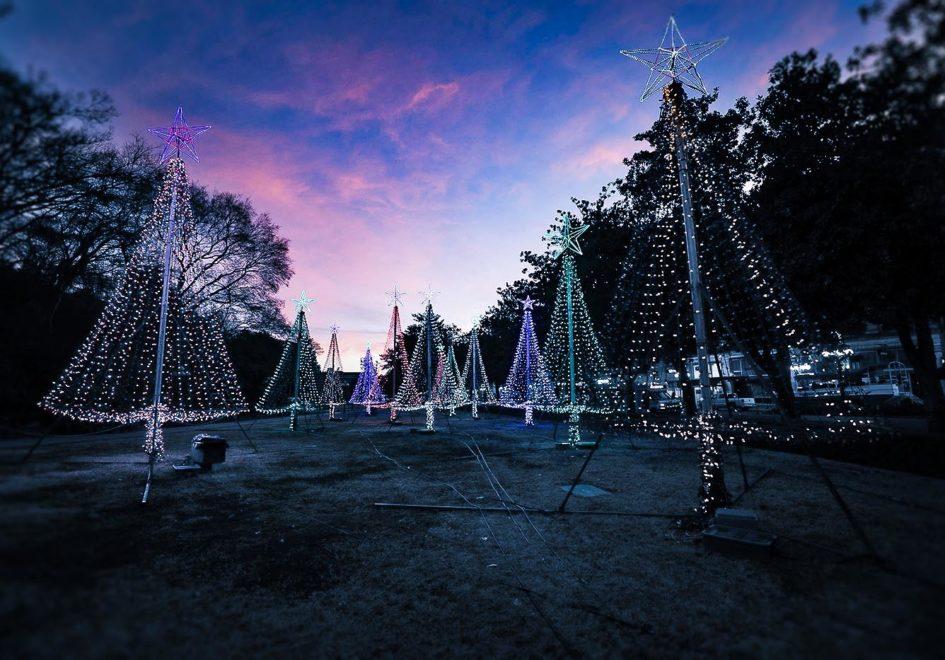 Xmas lights at Arlington Park